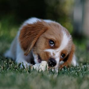 Dicas para cuidar do seu pet durante as festas juninas e julinas