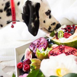 Benefícios de uma alimentação saudável para o seu pet
