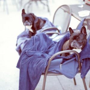 Principais Cuidados com a Higiene dos Pertences Pets