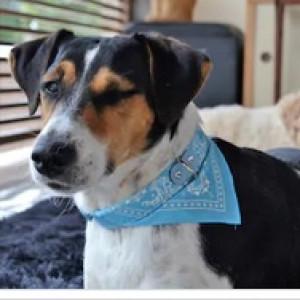 Novembro Azul: Você Sabia Que os Cães Também Podem Desenvolver Câncer de Próstata?!