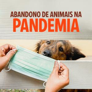 Abandono de animais na pandemia